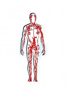gefaesse-vitamine-kreislauf-212x300